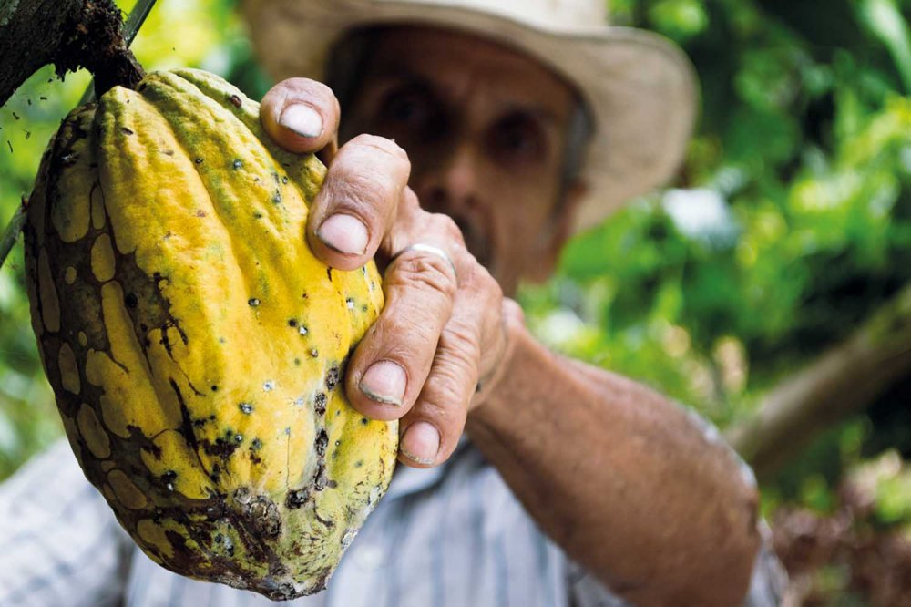 Raccoglitore di cacao