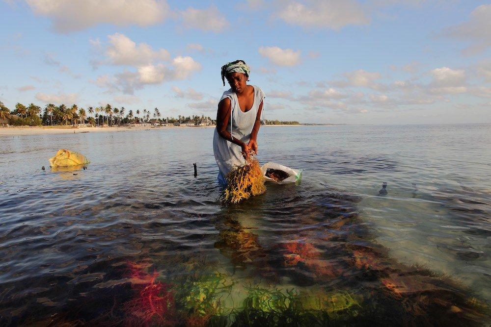 Donna raccoglie alghe