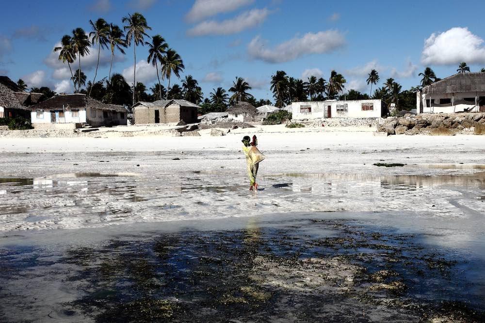 Donna Zanzibar alghe