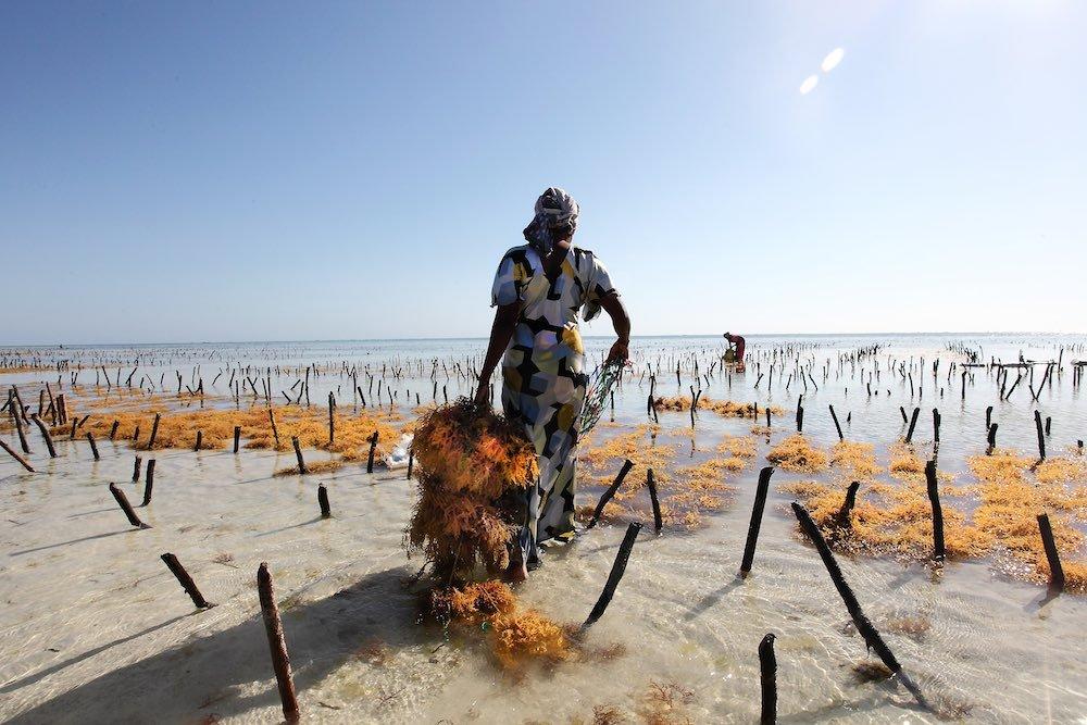 Donna che trascina alghe